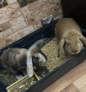 Кролики вместе с клеткой !!!