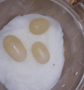 Яйца Мегасов. Три по цене двух!!!