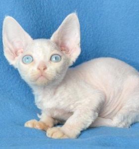белоснежные девочка,голубые как небо глаза