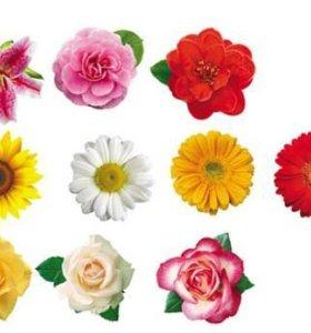 Набор цветов на скотче для украшения стен