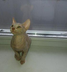 Продам котёнка породы Донской сфинкс
