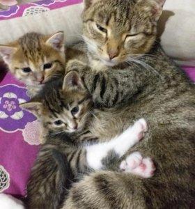 Котята простой русской кошки