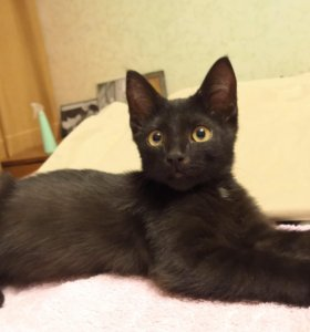 Котенок, 3,5 - 4 месяца