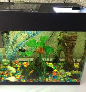 Продам аквариум , аксессуары, рыбки