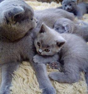 1 кот. 1 кошечка. К туалету приучины!