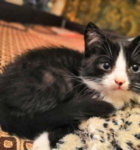 Отдам котенка- девочку в добрые руки