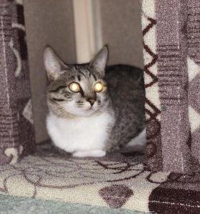 Кошка по кличке Белка