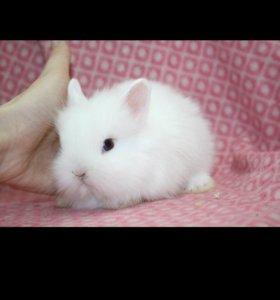 Белый кролик ручной доставка