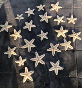 Звёзды морские засушенные