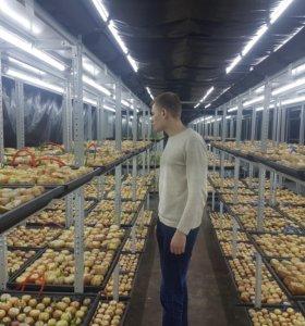 Луковая ферма