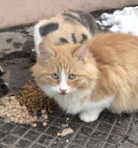Пушистый рыжий котёнок в добрые руки