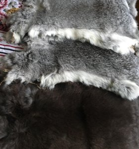 Выделанные шкурки кролика