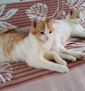 Котик Счастье и Радость в доме
