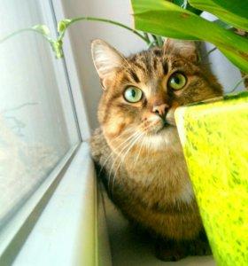 Не рыжий кот Пиксель ищет новый дом