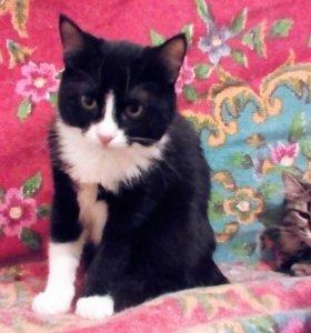 котенок Ириска в добрые руки