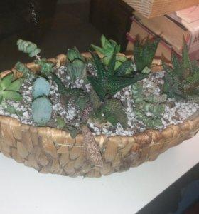 Флорариум из суккулентов, мини сад