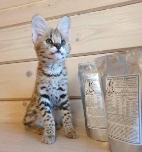 Пищевая добавка Wild Trax Feline Supplement.
