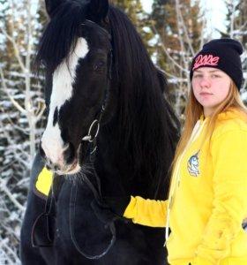 Аренда лошадей для фотосессий