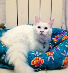 Кошечка мейн кун💝