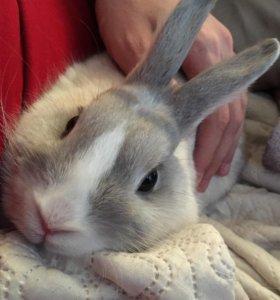 Кролик (девочка)