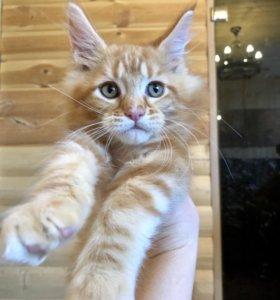 Красный мрамор кот