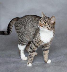 Люся - добрая ласковая кошка в дар