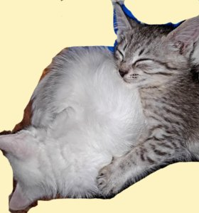 Кошечка 3х месячная