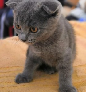 Котята ищут любящих хозяев.