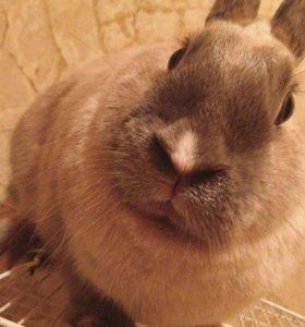 Продаётся Декоративный кролик.