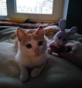 Прямой потомок кота в сапогах