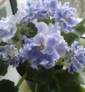 Магазин комнатных цветов в волгодонске, букет цветов флористом