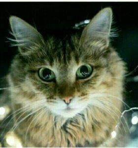 Кошка охотница