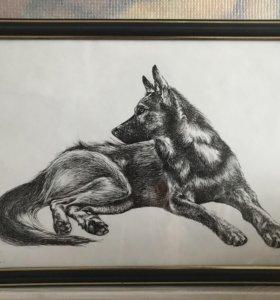 Рисунок, графика «Собака»