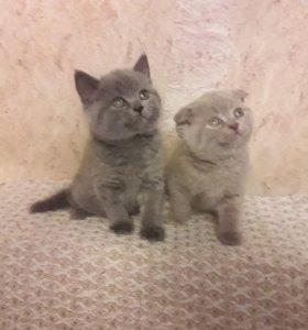 Красивые малыши