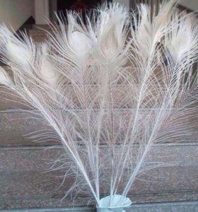 Красивые настоящие перья павлина