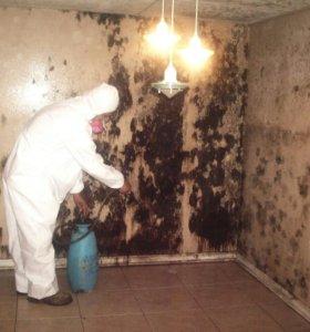Плесень и грибок у вас дома?