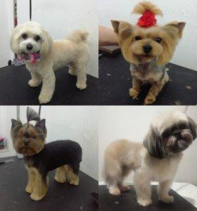 Груминг стрижка собак и кошек на дому