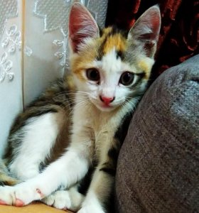 Кошечка ищит дом