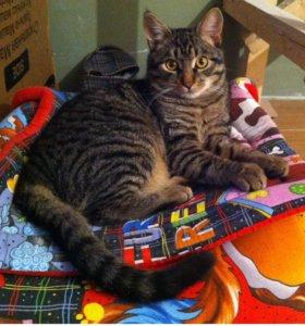 Молодой кот ищет дом (кастрирован,к лотку приучен)