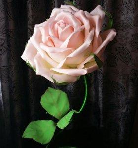 Роза ночник на ножке