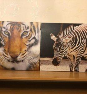 Постеры с животными 50х50 см