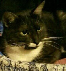 Клеопатра-молодая кошка с трудной судьбой ищет дом