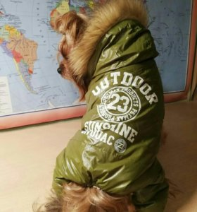 Одежда пакетом для собак Йорка тоя чихуа хуа