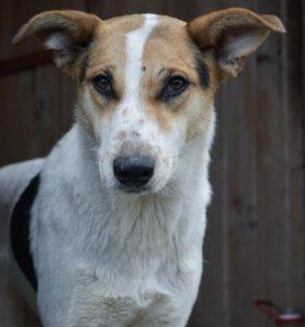 Ищет дом стерилизованная собака Юла!
