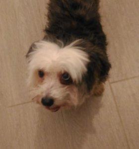Найдена собака в р.п. Ерзовка