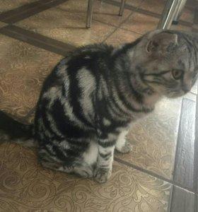 Пропала кошка
