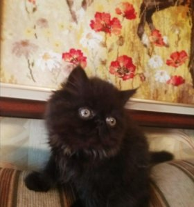 Квартет котят
