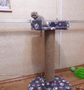 Когтеточка - трон