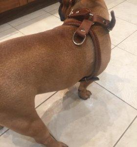 Шлейка для собаки