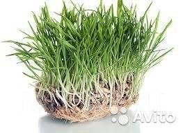 Семена газонных трав в Хабаровске